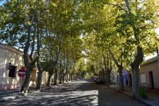 Colonia-Del-Sacramento-Plaza-Trees-1024x682