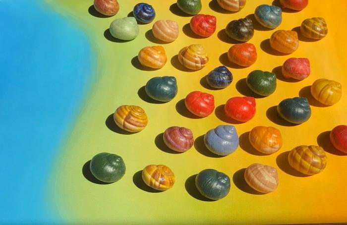 snail shore