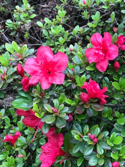 Hall flowers